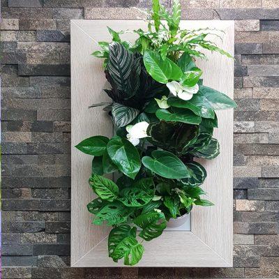 vertikálne umiestnenie kvetov
